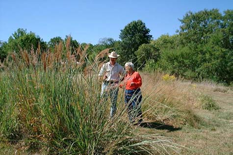 Pat and Jamie Inspect Some Native Grass